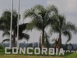 El color de Concordia 2014
